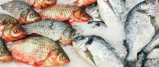 Is Fish Allergy Or Intolerance Real Yorktest